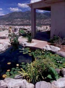 Natural swimming pool in Tucson, Arizona